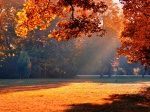 autumn-park-sunshine-1600x1200